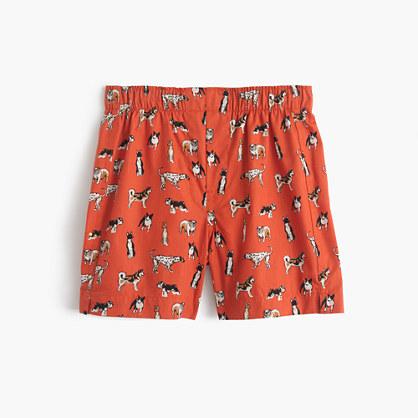 Boys' dog boxers